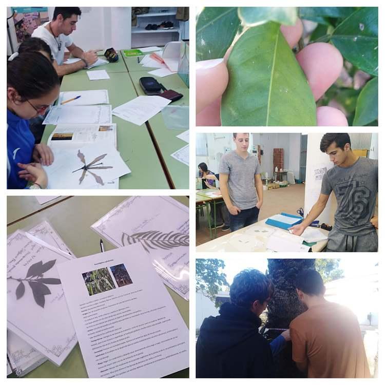 """Foto El alumnado del programa """"Actividades auxiliares en conservación y mejora de montes"""" de Crea..."""