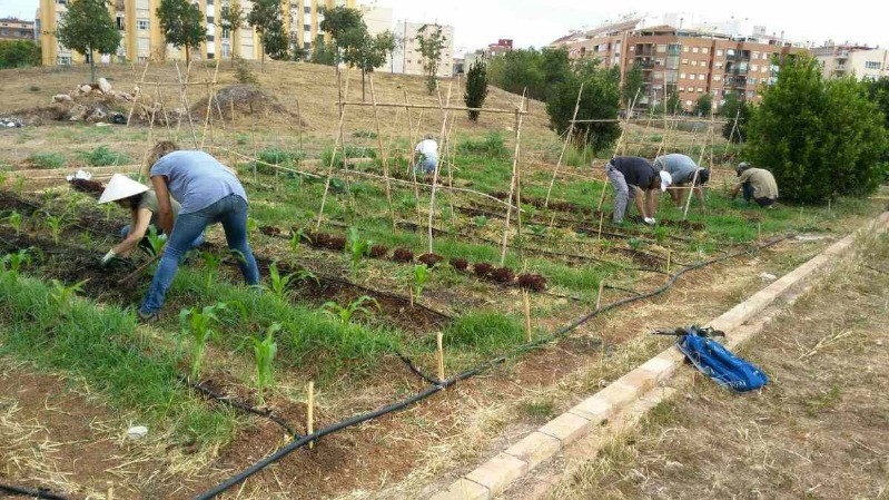 Foto CreamaDénia ofereix un nou programa formatiu d'activitats auxiliars en agricultura lligat a...