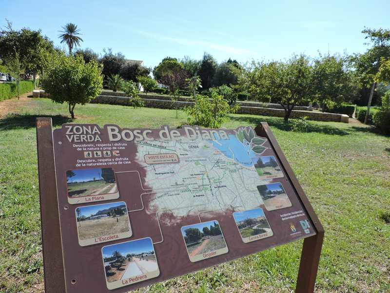 El Ajuntament de Dénia acondiciona una senda peatonal en el interior del Bosc de Diana que f...